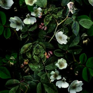Kews Leafy florals green with hint of Pink - Sabine Schröter | blossoms floral flowers foliage leaf leaves nature plants