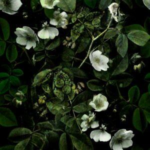 Kews Leafy Florals green - Sabine Schröter | blossoms floral flowers foliage green leaf leaves nature plants