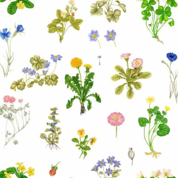 Botanical - Stephanie Komarek-Fechler | Allover Blumen botanisch Handzeichnung Natur Pflanzen Rapport realistisch